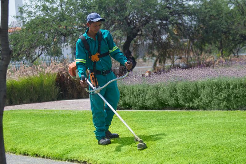 Servicio de jardiner a express en quer taro - Servicios de jardineria ...